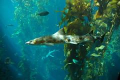 Monterey Aquarium (Jim Strachan) Tags: california montereyaquarium