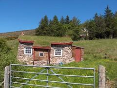 Scoraig thatch roof