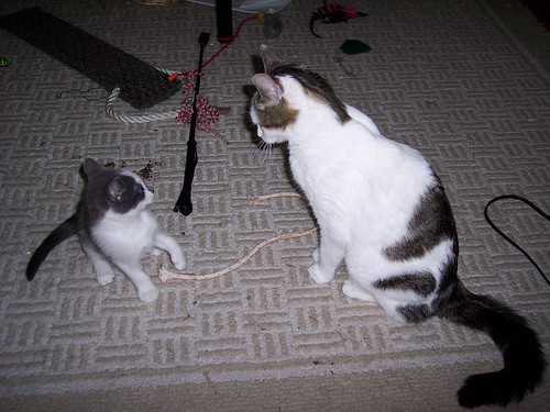 McCullough and Freya face off