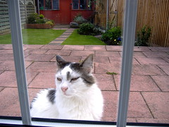 old windows cats white black cute cat doors 5 whiskers months walshy 14years