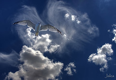 Jonathan Livingston Seagull I am ready, he said at last.  And Jonathan Livingston Seagull rose with the two star-bright gulls to disappear into a perfect dark sky. (Jalca) Tags: world china africa blue light canada west bird lov