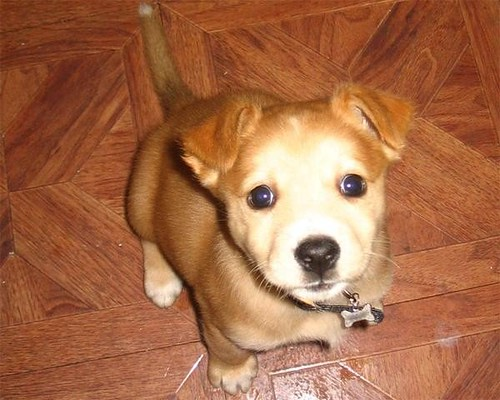 Tini Puppy