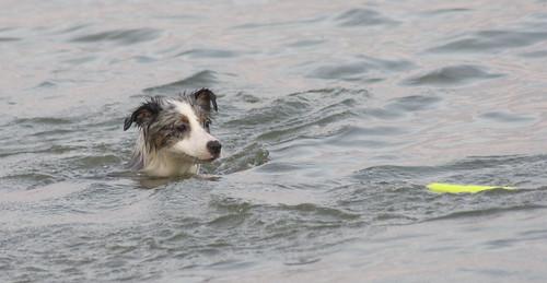 Periscope Pup
