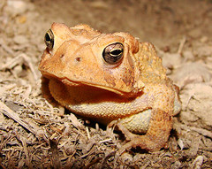 Happy Toad (Kathy1976) Tags: nature toad soe americantoad supershot