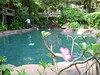Cleaning the pool (Jamie Hutt) Tags: bee spelling thani surat