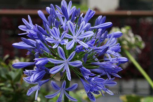 Flores en la Orotava - Tenerife