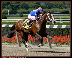 $16 million racehorse The Green Monkey finishes third in debut (Rock and Racehorses) Tags: ny parishilton forestry third 3rd pletcher greenmonkey horsesatwork theraceisnottotheswift thegreenmonkey coolmore theparishiltonofracing