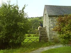 buildings   shrine steps and gate