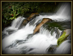 Waterfall (Domesticated Diva) Tags: flowers plants water waterfall moss rocks nashville tennessee softness magical soe oprylandhotel shiningstar 2007 naturesfinest platinumphoto anawesomeshot diamondclassphotographer flickrdiamond ysplix ljomi platinumphotograph zenenlightenment theperfectphotographer proudphotoshopper