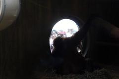 DC Zoo 220 (iamjosh) Tags: dczoo