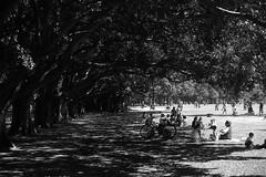 Sombras (AlexJ (aalj26)) Tags: parque shadow brazil bw white black sol branco brasil de nikon do sãopaulo sunday sombra pb dia preto jorge e ibirapuera verão alexander domingo d90 alexj aalj26 alexanderaljorge