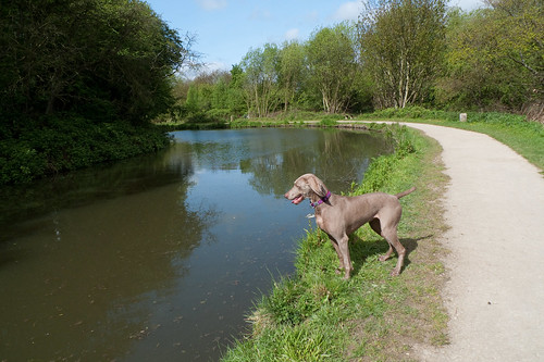 A Walk At Chesterfield Canal