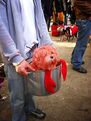 Halloween Dog Parade, Tompkins Square Park 1