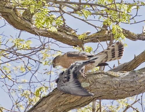 coop prey erich hayner oakland