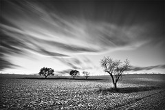 Four in the Field (180 Seconds) (DavidFrutos) Tags: longexposure trees sunset bw monochrome clouds atardecer grey gris monocromo interestingness rboles paisaje bn explore murcia filter nubes nd alfa alpha filters filtro sigma1020mm largaexposicin filtros gnd neutraldensity nd1000 sonydslr flickraward densidadneutra platinumheartaward bwnd110 interesantsimo davidfrutos 700 niksilverefexpro theacademytreealley mygearandmepremium mygearandmebronze mygearandmesilver mygearandmegold singhraygalenrowellnd3ss mygearandmeplatinum mygearandmediamond bestmagicofnature ciezaycalasparra