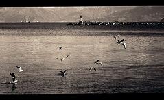 (OualiBelahsene) Tags: africa sea mer mountain bird port montagne landscape algeria kabylie northafrica paysage far oiseaux spia berbere brise bjaia bgayet