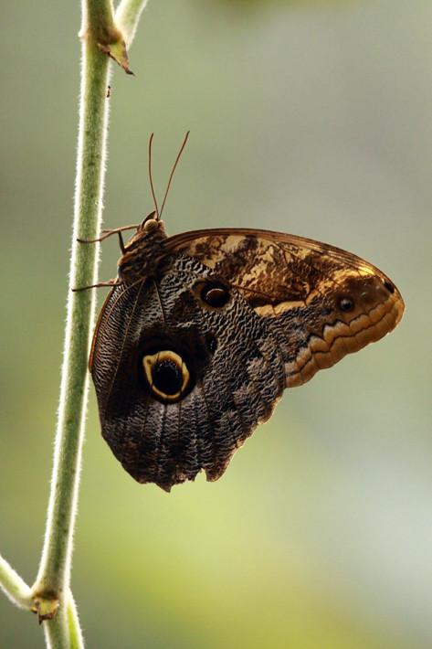 110710_butterfly01
