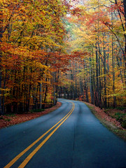 lined with colors (bdaryle) Tags: road autumn fall nature colors sony umsteadpark 100commentgroup brandondaryle bdaryle imagesbybrandon