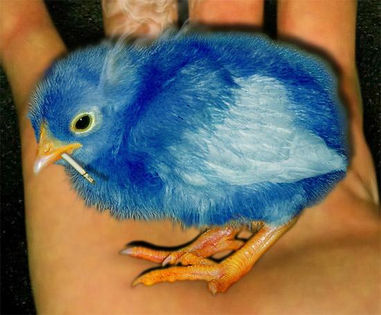 chickdeet