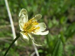 20070616 Wildflower
