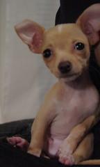 napstand (tomas raul) Tags: dogs animal napoleon