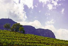 montsant vineyards