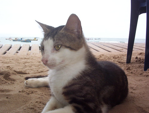 Gato na praia by Rogério Paco.
