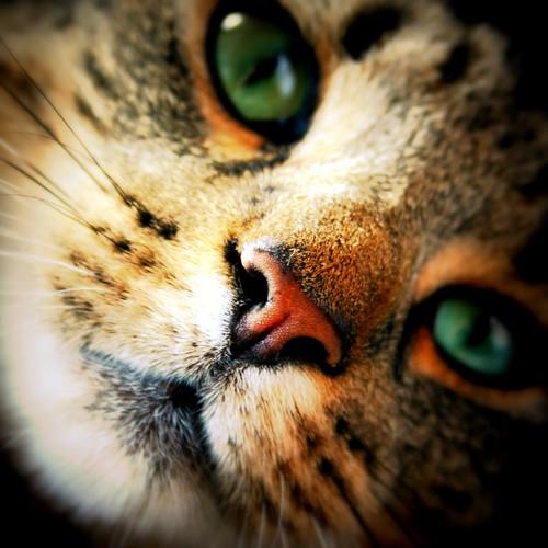 Amazing Cat: The Amazing World Of Cat's Eye Macro Photography