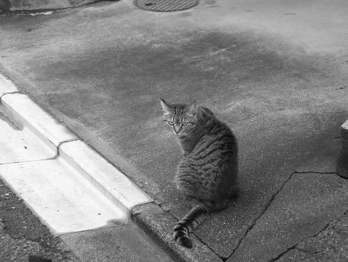道沿いの猫