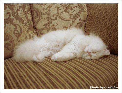 睡在沙發上的Hane