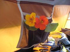 decor (leeloo9) Tags: germany campingplatz makingholiday