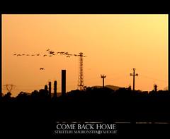 come back home (mauronster) Tags: sardegna sunset summer italy canon italia tramonto flamingo sigma tramonti 70300mm cagliari fenicotteri sigmalenses canon400d mauronster canoniani