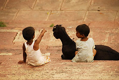 I see a greener pasture there (sanjayausta) Tags: new girls boy pet baby india black game girl animal stone children holding asia child play sister brother delhi indian steps goat mat help pasture pointing cot sleeepy clutching myeverydaylife