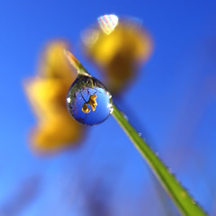 Along the Same Lines (ecstaticist) Tags: blue sky flower macro grass yellow bravo obsession refraction onblue themoulinrouge eow magicdonkey colquitz aplusphoto diamondclassphotographer ishflickr 1000drops ectopf 07top goldenvisions