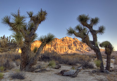Rising Sun on Red Rock (sandy.redding) Tags: redrockcanyon california landscape desert joshuatree hdr explored nikkor1855mmf3556g abigfave impressedbeauty aplusphoto diamondclassphotographer flickrdiamond theperfectphotographer shotwithstevemendenhall