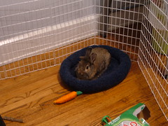 Cocoa in his bed