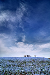 Deep blue sky (Nacho Valo) Tags: blue sky japan azul 日本 koen 空 japon hitachi ibaraki 日立 kaihin 青い 茨城県 日立海浜公園
