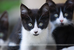 324. Black and White (Eyes of sky) Tags: california cat losangeles     80200mmf28afs boc0610