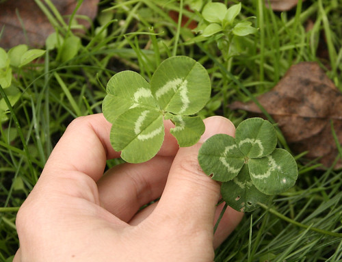 double clovers