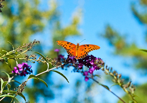 October butterfly