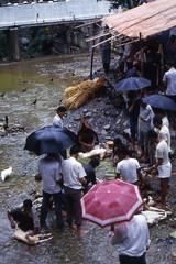 Sacrificio alla Dea kal (mfiora50) Tags: poverty nepal animal headless blood massacre religion morte violence oriente orient animali fede sangue povert decapitazione sacrificio violenza deathsentence senzatesta massacro deakal offersacrifice