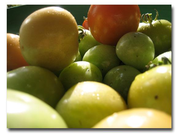 tomatskord