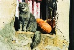 Gatto con zucca (.chourmo.) Tags: finestra toscana gatto zucca sorano sfidephotoamatoriwinner thecatwhoturnedonandoff