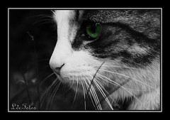 Sad Natured Cat Eyes - by Leefotos