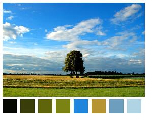 Palette de couleur à partir d'une image