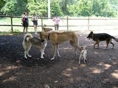 dog park september 2007