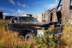 2007_08240053 (Curtis Gregory Perry) Tags: auto car automobile mobil cadillac motor caddy automvil xe automobil     samochd  kotse  otomobil   hi   bifrei  automobili   gluaisten