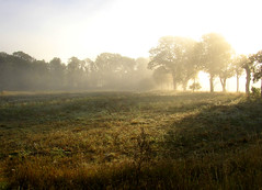 Hazy morning (Per Ola Wiberg ~ Powi) Tags: autumn trees mist nature haze october niceshot sweden loveit fields sverige avenue soe breathtaking trd 2007 morningmist musictomyeyes naturescenes falltime naturegroup favoritephotos beautifulearth all natureworld supershot flt eker 123nature creativephoto flickrstars magicofnature goldenmix abigfave topofthefog morgondimma ekebyhovsalln diamondclassphotographer keepyoureyesopen flickrbronzeaward onlythebestare treesinthemist diamondstars eperke naturewatcher onlynatureaward wonderfulworldmix exemplaryshotsflickrsbestgroup sasaward theperfectphotographer bestofautumnandwinter naturelimited peaceawards thebestshot highqualityimage theloveshack panoramafotogrfico artofimages universeofnature bestcapturesaoi naturesprime totaltalent naturesribbon youandtheworld mygearandme mygearandmepremium naturesanctuary buildyourrainbowtransparent thewonderfulnatureworld mygearandme2premium naturespoetry~~ bestmagicofnaturelevel2 rememberthatmomentlevel1 niceasitgets~level1