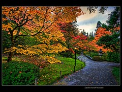 Kinda Like A Kinkade HDR (Fresnatic) Tags: seattle autumn red orange color fall yellow pacificnorthwest lamplight washingtonstate japanesegardens hdr photomatix autumninseattle seattlejapanesegardens lightroom2 canonrebelxsi topazadjust fresnatic