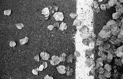 Splat (Balthus Van Tassel) Tags: road autumn leaves concrete paint tmax bessa spit 100 r3a tar splat kodk